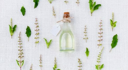 6 צמחי מרפא לבריאות שלפוחית השתן